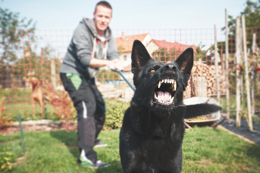 Щенок лает на других собак